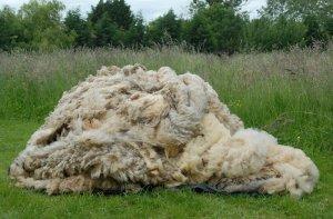 Composting wool
