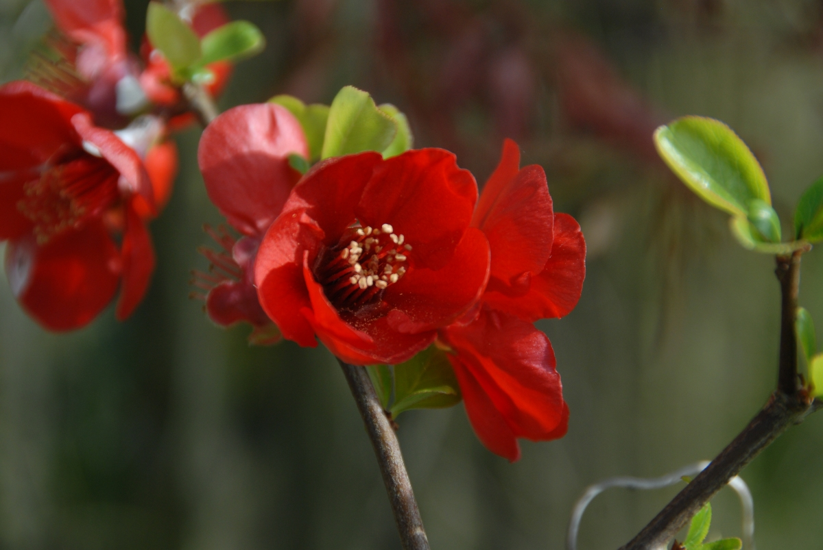 Spring Woo