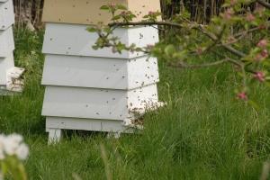 Starting to swarm