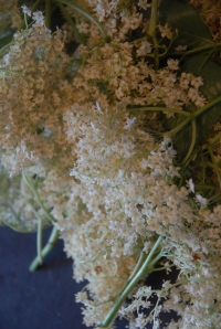 The precious elderflowers