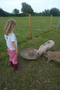 PJs and pigs - E on a pre-bedtime visit to take the pigs some treats